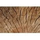 Grunge texture of stump - GraphicRiver Item for Sale
