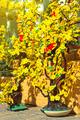 Flower Market - PhotoDune Item for Sale