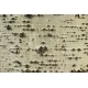 Crust layer of poplar - GraphicRiver Item for Sale
