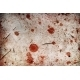 Blood Spots - GraphicRiver Item for Sale
