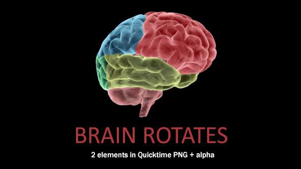 Brain Rotates