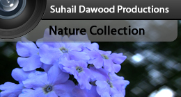 Nature Collection - SD Productions