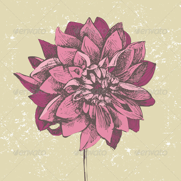GraphicRiver Dahlia Flower 4909073