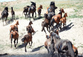 Herd of horses - PhotoDune Item for Sale