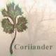 Coriiander