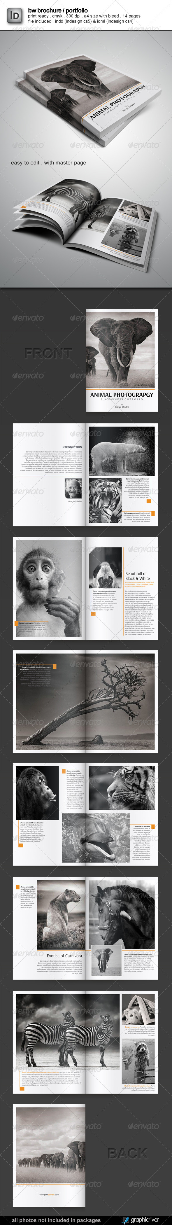 GraphicRiver Brochure Portfolio Template 4919950