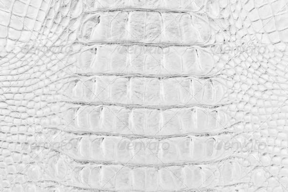 White Crocodile Bone skin texture. - Stock Photo - Images