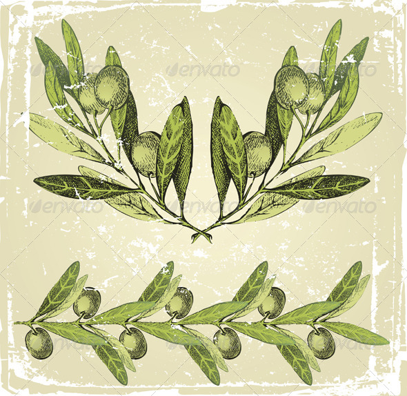 GraphicRiver Hand Drawn Olive Branch 4932010