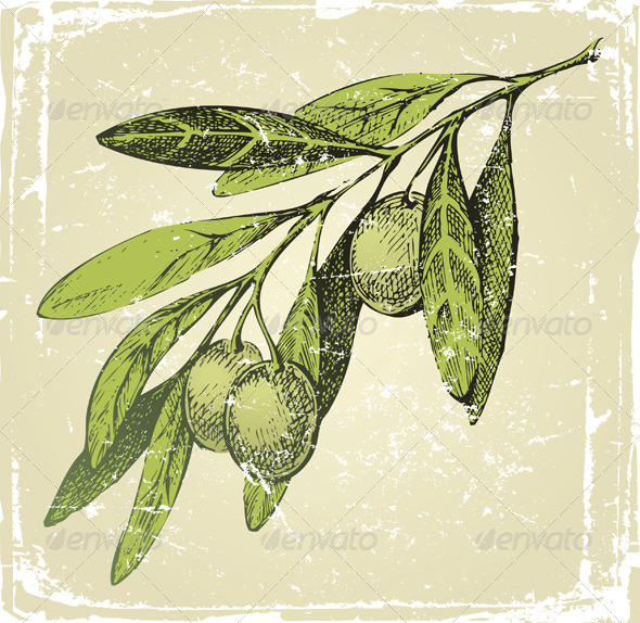 GraphicRiver Hand Drawn Olive Branch 4932019