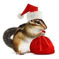 Chipmunk in red Santa Claus hat with Santas bag - PhotoDune Item for Sale