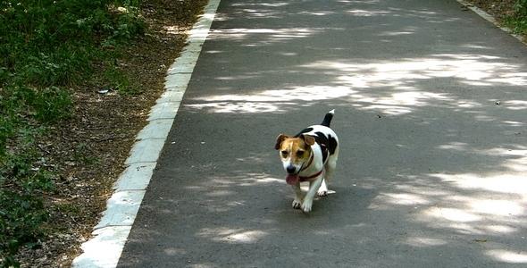 Dog in Park