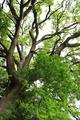 Ancient oak tree detail - PhotoDune Item for Sale