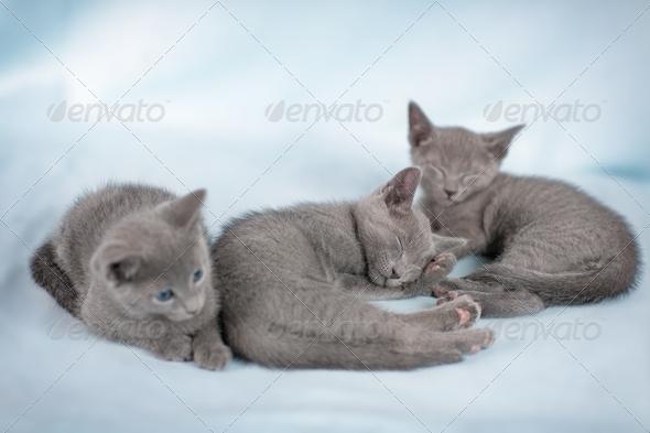 Beautiful cat - Stock Photo - Images