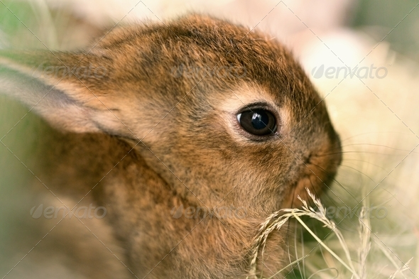 Cute animal - Stock Photo - Images