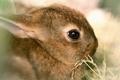 Cute animal - PhotoDune Item for Sale