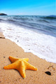 Starfish on a Beach - PhotoDune Item for Sale