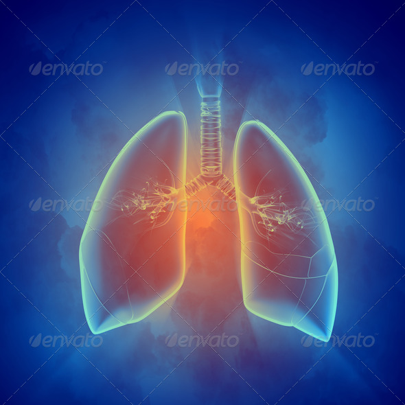 Schematic illustration of human lungs - Stock Photo - Images
