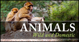 ANIMALS Wild and Domestic