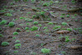 Bunch of green moss on the ground in the forest - PhotoDune Item for Sale