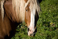 A brown horse standing on grass on a willow looking into camera - PhotoDune Item for Sale