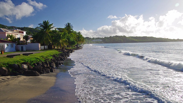 Caribbean Beach With Palm