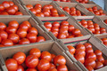 Boxes of Tomatoes - PhotoDune Item for Sale