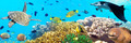 Underwater panorama - PhotoDune Item for Sale