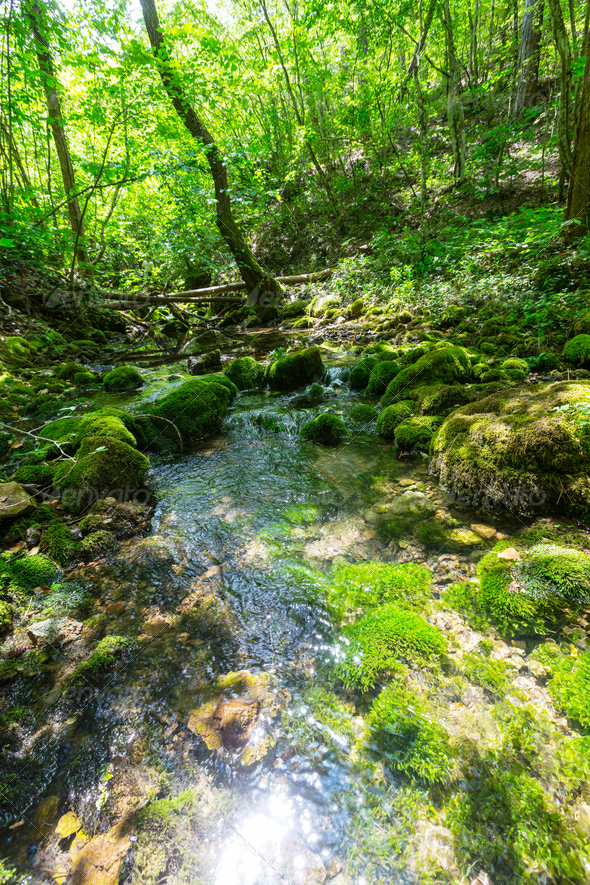 Creek in forest - Stock Photo - Images