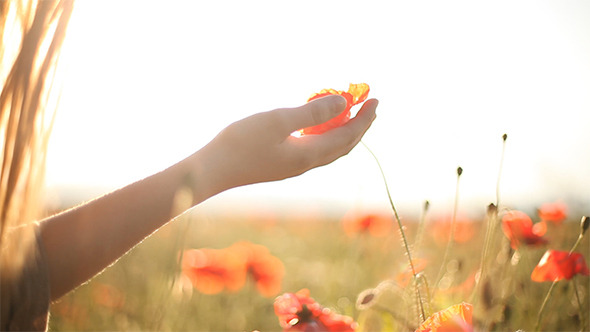 Girl Looking At Wild Poppies