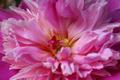 Pink Flower Bloom - PhotoDune Item for Sale