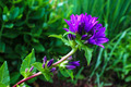 Wildflower - PhotoDune Item for Sale