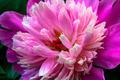Bloom Macro - PhotoDune Item for Sale