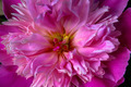 Bloom - PhotoDune Item for Sale
