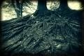Holga roots - PhotoDune Item for Sale