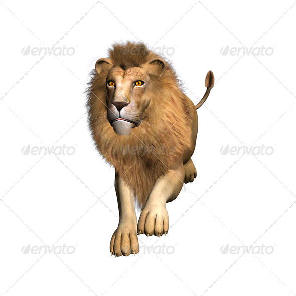 Jumping Lion  - Stock Photo - Images