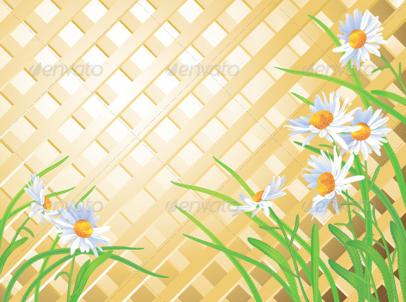 GraphicRiver Daisies 5024251
