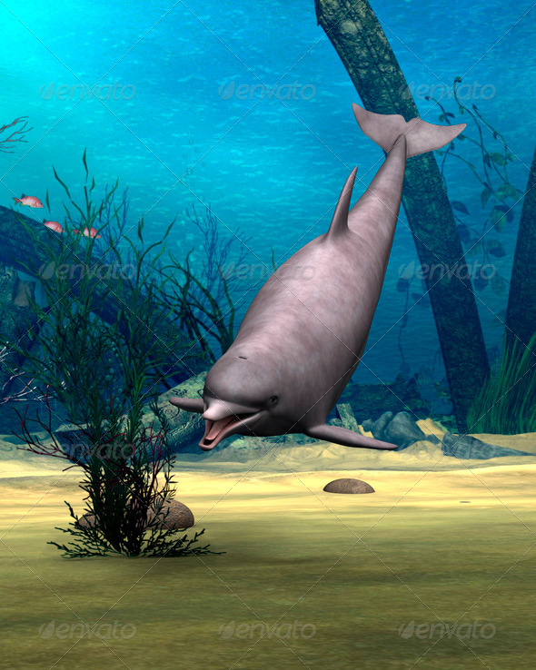 Dolphin  - Stock Photo - Images