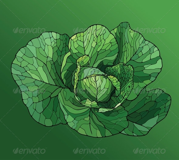 GraphicRiver Heads of Cabbage Close Up 5027055