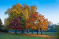 colorful trees - PhotoDune Item for Sale