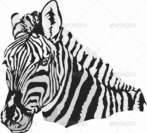 GraphicRiver Zebra 4883471