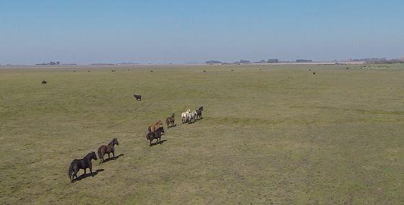 Running Horses on Field