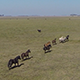 Running Horses on Field - VideoHive Item for Sale