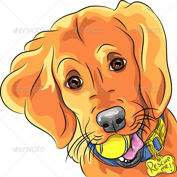 GraphicRiver Vector Puppy Dog Breed Golden Retriever 5037017