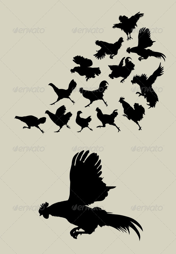 GraphicRiver Chicken or Rooster Running Silhouettes 5039647