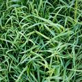 Frosty Grass - PhotoDune Item for Sale