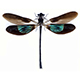 Dragonfly%20wings%20brown%20and%20green%20avatar