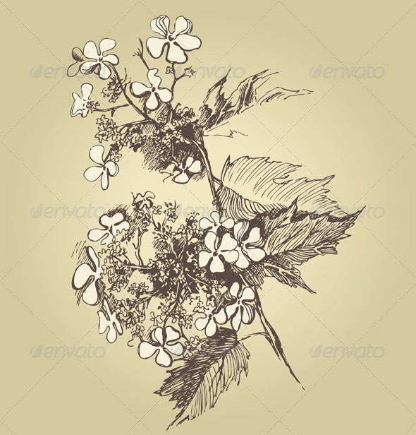 GraphicRiver Viburnum Flower 5049711