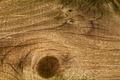 Wood Grain - PhotoDune Item for Sale