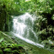 Waterfall In Forest - 6