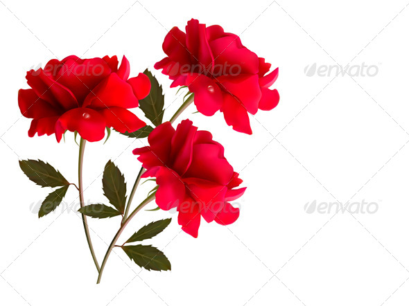 Holiday Background with Three Red Roses